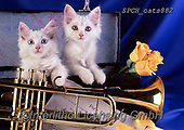 Xavier, ANIMALS, REALISTISCHE TIERE, ANIMALES REALISTICOS, cats, photos+++++,SPCHCATS882,#a#, EVERYDAY