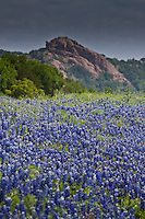 Enchanted Rock in the background with blooming Bluebonnets. Enchanted Rock State Natural Area consists of 1643.5 acres on Big Sandy Creek, north of Fredericksburg, on the border between Gillespie and Llano Counties. It was acquired by warranty deed in 1978 by the Nature Conservancy of Texas, Inc., from the Moss family. The state acquired it in 1984, added facilities, and reopened the park in March 1984, but humans have visited here for over 11,000 years. Enchanted Rock was designated a National Natural Landmark in 1970 and was placed on the National Register of Historic Places in 1984. The Rock is a huge, pink granite exfoliation dome, that rises 425 feet above ground, 1825 feet above sea level, and covers 640 acres. It is one of the largest batholiths (underground rock formation uncovered by erosion) in the United States.