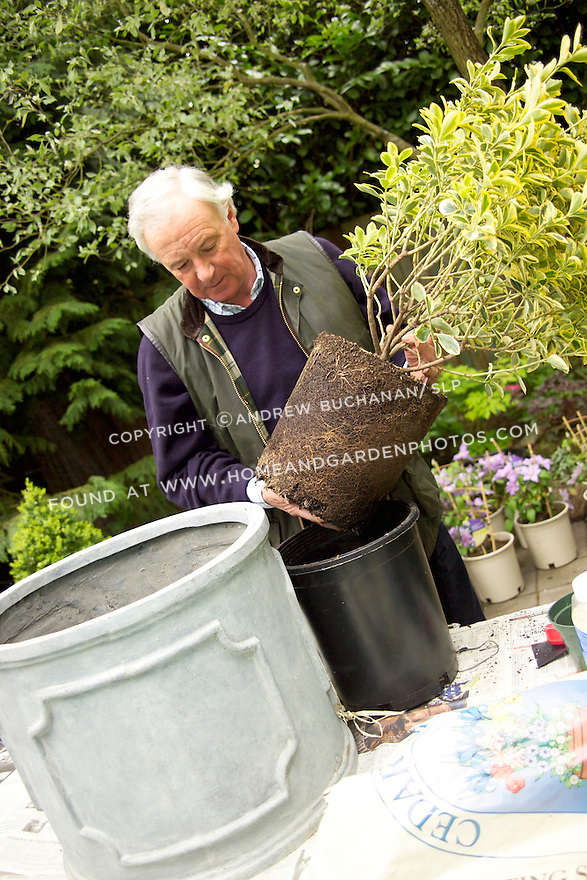 British clematis expert, Raymond Evison, of the Guernsey Clematis Nursery, prepares to replant a shrub in a mixed container.