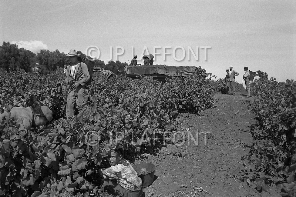 Ecole Militaire d'Infanterie de Cherchell, Algérie, July 1960. EOR (Eleves Officiers de Reserves). During the training farming goes on: herd keeper and grape harvesting...