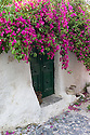 Mesa Gonia, Santorini, Greece. 08.05.2014. Green painted doors, with purple bougainvillea above, to inhabited house in Mesa Gonia. Mesa Gonia was destroyed by an earthquake in 1956, and the inhabitants largely moved to Kamari. The village is only recently being repaired and reinhabited. There are still many derelict houses. Photograph © Jane Hobson.