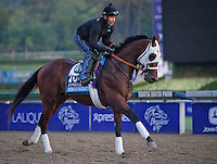 Strong Mandate, trained by D. Wayne Lukas, trains for the Breeders' Cup Juvenile at Santa Anita Park in Arcadia, California on October 30, 2013.
