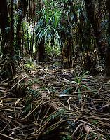 Pandanus Forest,<br />