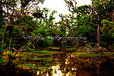 "Down in the swamps about 100 miles southwest of New Orleans, Louisiana.  Gators and other wildlife live in a magical kingdom.  20"" x 13"".  Printed on Parrot Digigraphic Photo Gloss paper.  Limited Edition of 25."