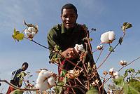 Tanzania, organic cotton project biore of swiss yarn trader Remei AG in Meatu district, farmer harvest bio cotton / Tansania , biore Biobaumwolle Projekt der Schweizer Remei AG in Meatu, Bauern ernten Biobaumwolle