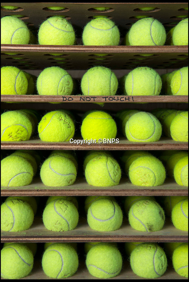 BNPS.co.uk (01202 558833)<br /> Pic: TomWren/BNPS<br /> <br /> Rows of tennis ball ready for testing to check the cloth.<br /> <br /> New balls please...<br /> <br /> As the country gets excited for Wimbledon, a textile factory has been hard at work making reams of fluffy yellow fabric for the world's most famous tennis competition.<br /> <br /> WSP Textiles makes the distinctive cloth that covers tennis balls for big name brands such as Dunlop Fort, Head ATP and the Wilson brands, as well as Slazenger's Wimbledon balls.<br /> <br /> They provide Slazenger with up to 140 rolls of material at a time - each 63 inches wide and 246ft long - which are then wrapped around more than 54,000 balls for the championship every year.