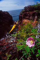 A wild rose blooms as a sea kayaker explores the rugged shoreline of Lake Superior on the Keweenaw Peninsula near Lac LaBelle, Mich.