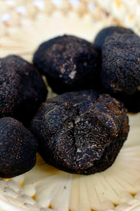 Truffes melanosporum
