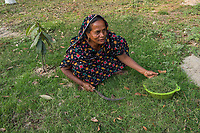 Bangladesh, Jhenaidah. Fecal Sludge Treatment plant, where the waste is disposed of. The SNV Development Organization is providing fecal sludge management and occupational safety training for toilet and septic tank cleaners. Woman cutting grass.