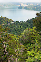 Te Mahia Bay in Marlborough Sounds, Nelson Region, Marlborough, South Island, New Zealand
