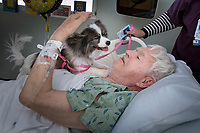 As a part of the pet therapy program, Joanne Duvall and her papillion, Jojo visit patient Mike Adams of Sun City  at Banner Boswell Hospital in Sun City.