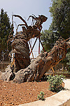 Judea, Abraham´s Oak (Kermes Oak) at the Russian Orthodox Church in Hebron. .