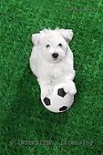 Xavier, ANIMALS, dogs, photos+++++,SPCHDOGS897B,#a# Hunde, perros
