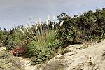 Local Flora 2, Upper Newport Bay, CA.