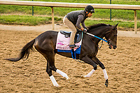 LOUISVILLE,KNY - MAY 03: Ever So Clever, Morning works for Kentucky Derby & Kentucky Oaks at Churchill Downs, Louisville, Kentucky. (Photo by Sue Kawczynski/Eclipse Sportswire/Getty Images)