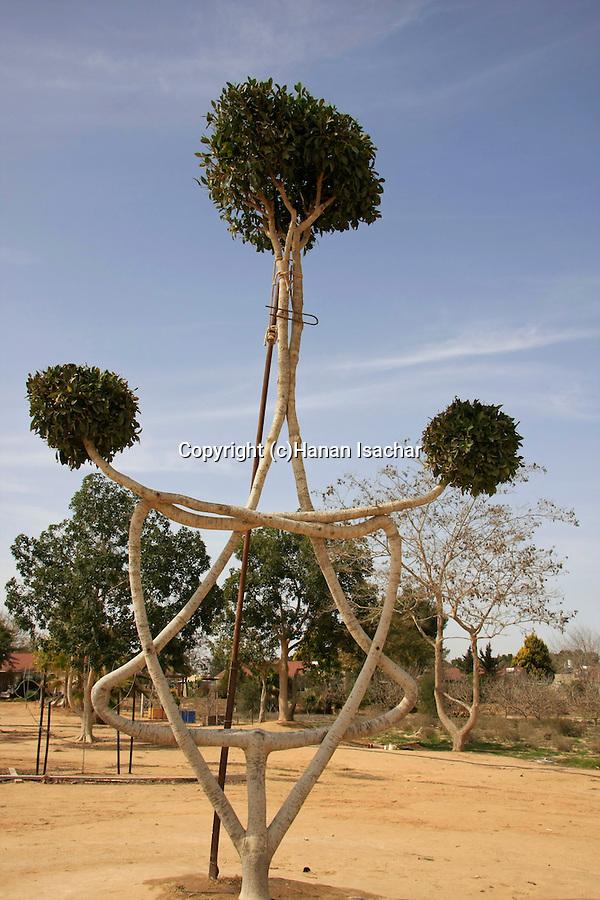 Israel, Negev. The tree garden of Arborsculptor Aharon Naveh in Kibbutz Revivim