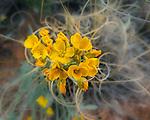 Miniature Bouquet near Bell Rock, Arionza