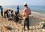 Sorting the cash on beach traditional seine fishing Nilavelli beach, near Trincomalee, Eastern province, Sri Lanka, Asia