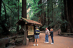 Tourists reading information sign about coastal redwood trees, Muir Woods National Monument, Marin California