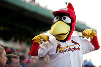 Louie, the mascot of the Springfield Cardinals, flexes for a fan during a game against the Northwest Arkansas Naturals at Hammons Field on June 14, 2012 in Springfield, Missouri. (David Welker/Four Seam Images)