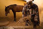2) La vie autour du cheval