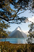 Mitre Peak Seen Through the Trees at Milford Sound, Fiordland, South Island, New Zealand. Mitre Peak is one of the most popular tourist sights at Milford Sound, rising 1692m above the water below.