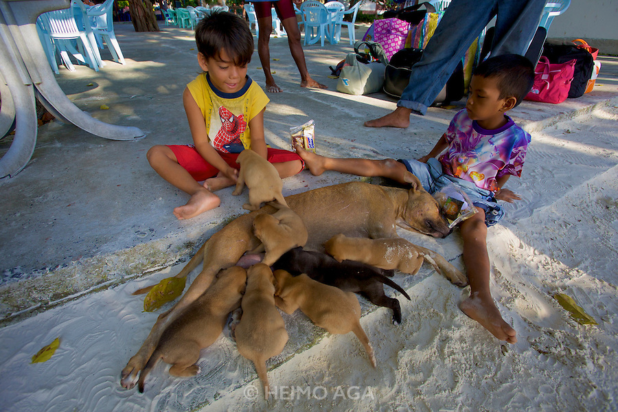 Pattaya Song Resort. Beach dog Lucy and her seven puppies.