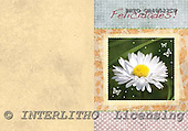 Alfredo, FLOWERS, paintings, BRTOCH40522CP,#F# Blumen, flores, illustrations, pinturas