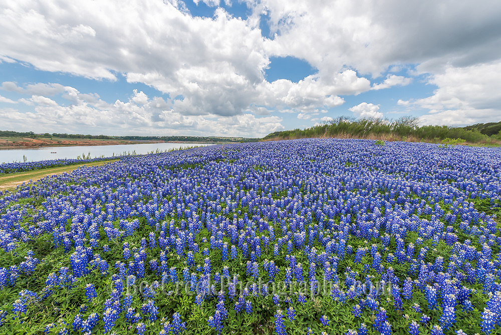 Field of bluebonnets by Muleshoe Bend park on lake travis or some refer to it as the colorado river.  What ever you call it was a wonderful site to see all these fields of bluebonnets along the lake.  This area has normally been under water but because of a sever drought the water is down.