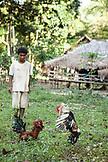 PHILIPPINES, Palawan, Barangay region, young Batak men in Kalakwasan Village train their fighting cocks