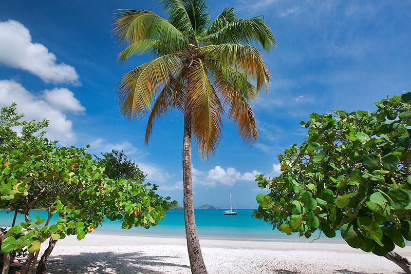 Beach at Megan's Bay with boat and palm tree. St. Thomas. US Virgin Islands.
