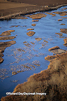00882-03017 Sandhill Cranes (Grus candensis) aerial above Platte River near Kearney   NE