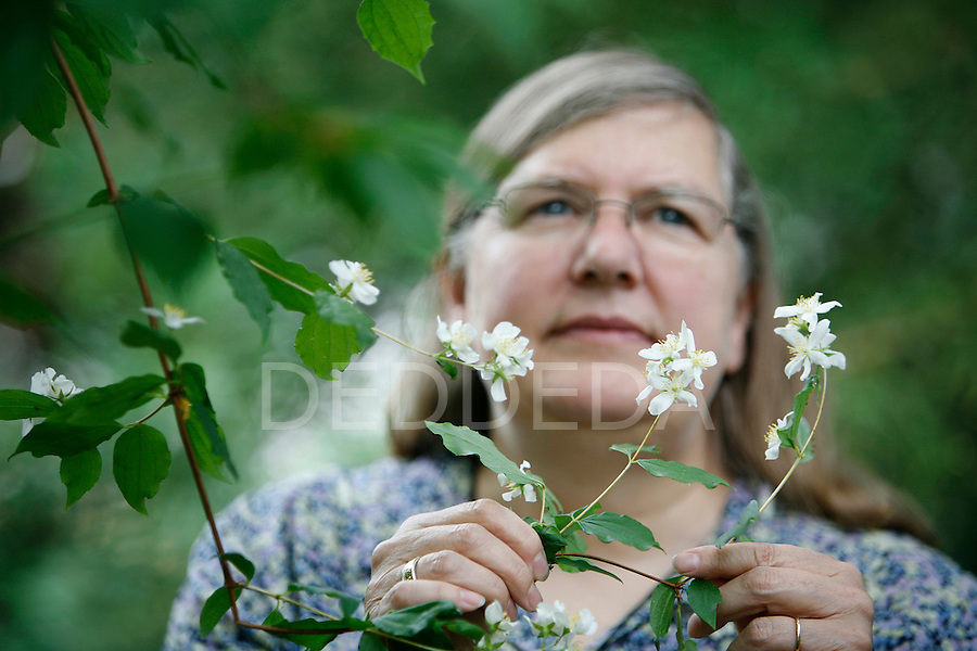 Nancy Turner, a professor at the University of Victoria, surrounds herself with native plants, including this mock orange, in her backyard in Victoria Sunday. Turner was named to the Order of Canada on Canada Day, for her work in ethnobotany, plant lore and agricultural customs of aboriginal people of British Columbia. Photo assignment for the Globe and Mail national newspaper in Canada.