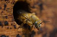 RIO DE JANEIRO, RJ, 19.04.2019 - NATUREZA-RJ - AME-Rio Abelhas Indígenas em parceria com Bondinho Pão de Açúcar estão trabalhando para multiplicar a população de abelhas sem ferrão na unidade de conservação do Pão de Açúcar, essas abelhas estão sendo introduzidas pelo importante papel na polinização plantas e na recuperaão da mata atlantica, Morro da Urca, Pão de Açúcar,Urca, zona sul do Rio de Janeiro, 19 (Foto: Vanessa Ataliba/Brazil Photo Press/Folhapress)