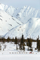 Mitch Seavey runs on the trail on Puntilla Lake shorlty before the Rainy Pass checkpoint with the Alaska Range in the background during during Iditarod 2016.  Alaska.  March 07, 2016.  <br /> <br /> Photo by Jeff Schultz (C) 2016 ALL RIGHTS RESERVED