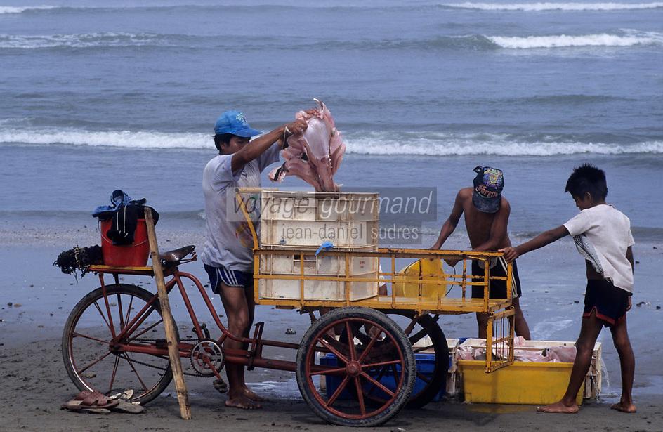 Amérique/Amérique du Sud/Pérou/Env de Chiclayo/Pimentel : Ramassage des filets de raie sur la plage