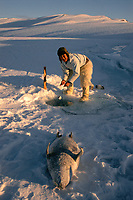 Inuit hunter, Jeremias Petersen, checking a net set under the ice to catch seals. Northwest Greenland