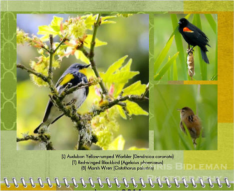 August 2011 Birds of a Feather Calendar