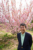 Makoto Hirade, president of Yamashin Sangyo, standing in front of a yaezakura cherry blossom tree. Matsukawa-city, Nagano Prefecture, Japan, April 26, 2013. Farmers in the Matsukawa area of Nagano prefecture grow yaezakura cherry blossom to be used as an ingredient in Japanese cakes, sweets and other foods.