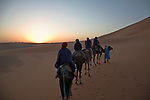 Camel trekking at sunrise dawn through the sand dunes of Merzouga, Morocco.