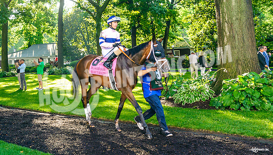 Dreams To Reality before The Delaware Oaks (gr 3) at Delaware Park on 7/9/16