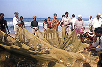 Fishermen with their day's catch at Chowra Beach, Trivandrum, Kerala, India.