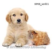 Xavier, ANIMALS, REALISTISCHE TIERE, ANIMALES REALISTICOS, FONDLESS, photos+++++,SPCHWS611,#A#