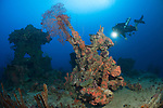 The wrecks of Truk Lagoon : Aikoku Maru