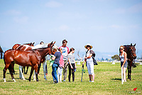 Candid goodies during the 1st Horse Inspection. 2017 NZL-Puhinui International 3 Day Event. Auckland. Thursday 7 December. Copyright Photo: Libby Law Photography