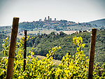 Castle on the distant hill:, vineyards, San Gimignano, Siena, Italy