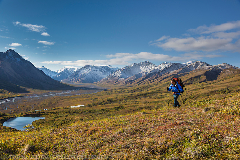 Backpacking on the autumn tundra along Teklanika River in Denali National Park, Interior, Alaska