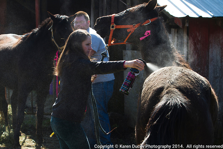 Hannah Mueller, DVM, treats a horse for rain rot, a bacterial infection caused from excessive moisture and lack of air, on Summer Raffo's farm in Oso, Washington on April 1, 2014. The 16 horses belong to Summer Raffo, who died in the Oso mudslide on March 22, 2014. Along with help from another vet and volunteers the horses received basic vet care, grooming and were fed fresh hay. Mueller is co-founder and vice president of the Northwest Equine Stewardship Center and practice owner of Cedarbrook Veterinary Care in Snohomish, Washington.