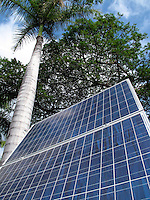 solar panels with palm tree in background