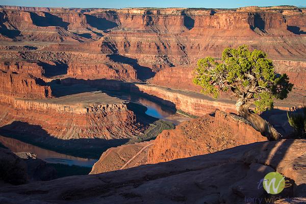 Canyonlands National Park. Utah. Dead Horse State Park overview. Colorado River gooseneck.